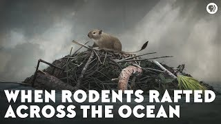 When Rodents Rafted Across the Ocean
