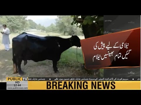 All buffaloes sold in auction held at PM House today | Public News