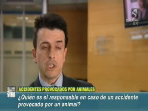Accidentes con animales