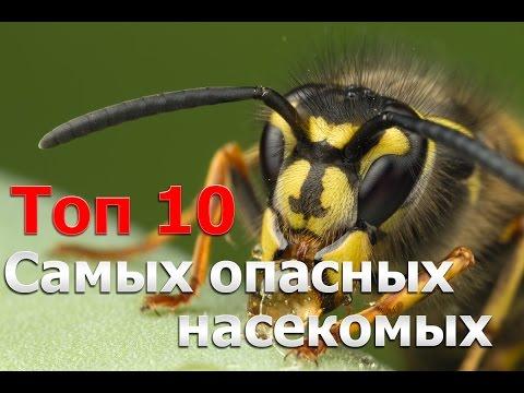 Топ 10 Самых Опасных Насекомых