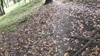 #5818, El caminos, los árboles y las hojas secas [Raw], Paisajes naturales