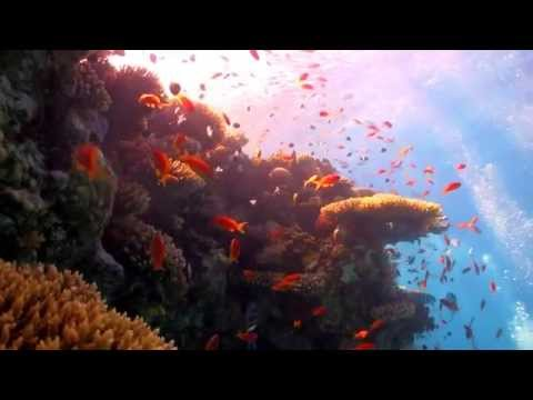 Coral Reefs: A Vanishing Act