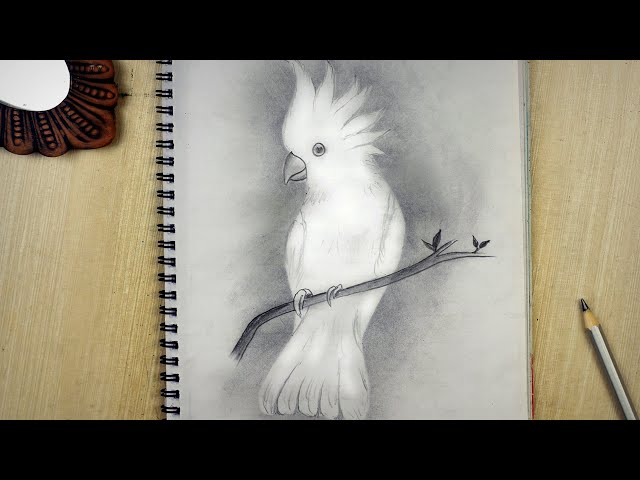 White Bird Drawing New Shading Techniques  Pencil Sketch White Bird Drawing Tutorial