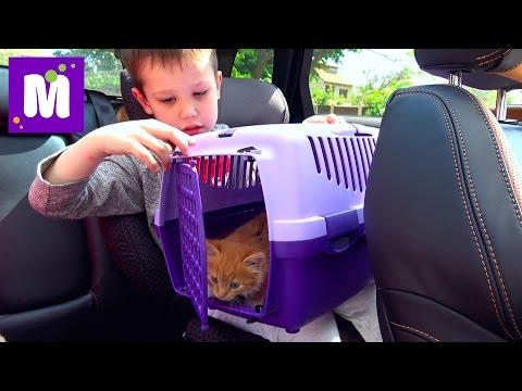 Кошечка Мурка ведём котёнка к ветеринару в клинику для животных ВЛОГ Cat in Animal Clinic Mister Max