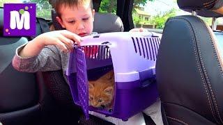 Download Lagu Кошечка Мурка ведём котёнка к ветеринару в клинику для животных Gratis STAFABAND