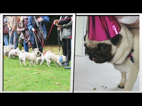 PUG PARTY! (Ellie's 1st Birthday) | MoreTDM