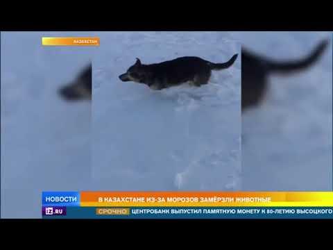 """Парадоксальный """"снегоапокалипсис"""": сильные морозы сковали Казахстан"""