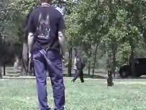 Police K9 dog training video