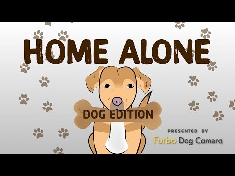 download lagu Home Alone: Dog Edition gratis