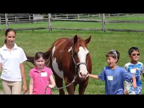 Fundraising a Necessity for Equine Therapy Programs and other NPOs