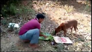 Kabila attack dog