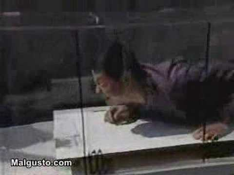 concurso japonés cocodrilo caimán Video