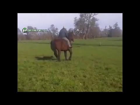 Huaso cayendose del caballo Chile
