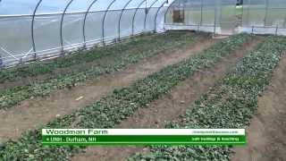 salt build up in soil leaching rimol greenhouse systems - Rimol Greenhouse Of Photos