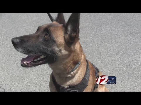Providence K-9 Unit to Assist With Boston Marathon Security
