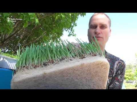 Экологическая микрозелень уже в Приднестровье