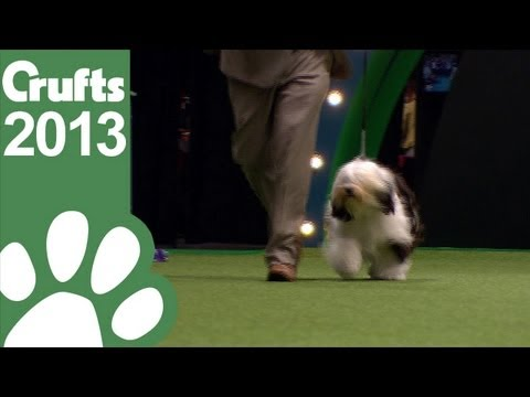 Group Judging Utility and Presentation - Crufts 2013