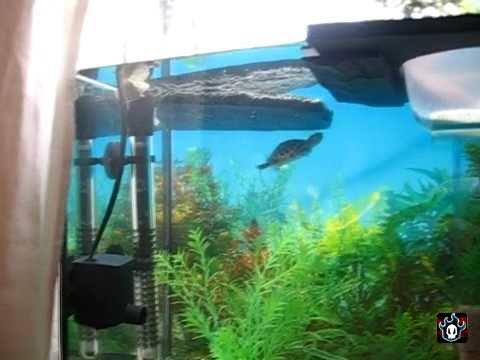 Acuario para tortugas parte 2 filtros y limpieza youtube for Acuario tortugas
