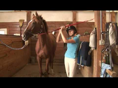 Horse Care & Buying Tips : How to Choose a Thoroughbred Horse