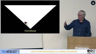 Homologies between birdsong and exploratory behavior