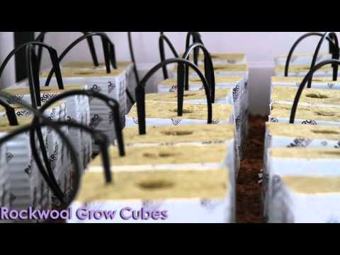 Grow Room! Grow Hydroponic by SuperCloset
