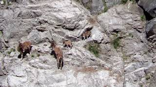 Mountain Mothers [Markhor Conservation, Jammu & Kashmir]