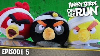 Angry Birds on The Run | The Flock Get Reflective - S1 Ep5