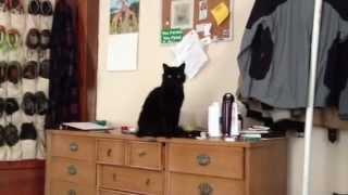 En 20 segundos este gato demostró ser un completo pesado