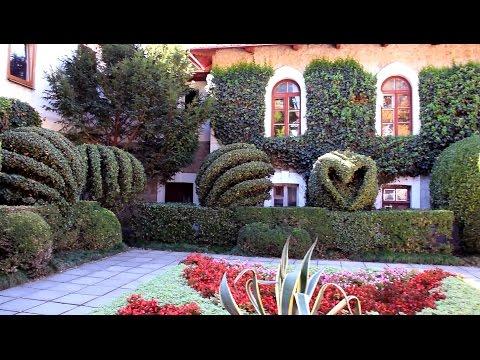Никитский ботанический сад ♫ Прогулка по жемчужине Крыма. Ялта, Никита