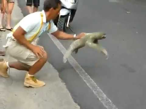 Sloth Crossing the Street- I Believe I Can Fly Version