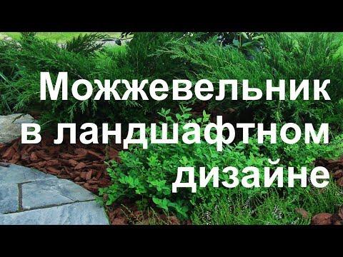 Можжевельник в ландшафтном дизайне по Москве и Московской области
