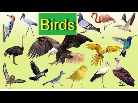 Названия птиц на английском языке. Birds. Learn birds.