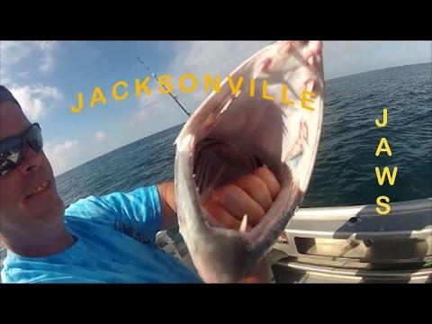 TIGER SHARK ON BARRACUDA BAIT, Jacksonville Fishing