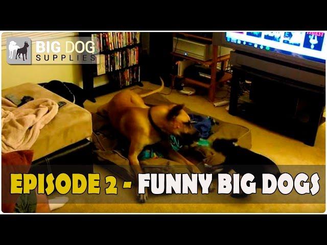 Funny Large Dog Video - Episode 2