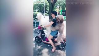 😍 Awesome Cats and Dogs   Funny Videos  2018 ❤️   Awesome Animals  by big dream