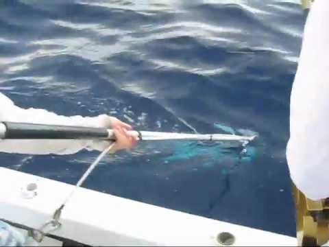 Huge Daytime Swordfish Over 600 lbs! 03/10/2012