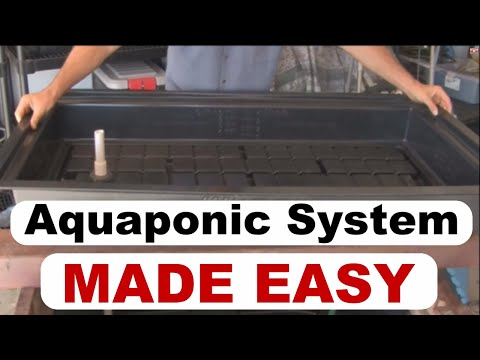 Aquaponic System Design | DIY Guide Will Made Easy Build your Aquaponic