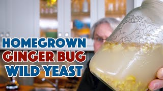 Ginger Bug Homegrown Wild Yeast How To