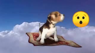 CUTE and Funny DOGS vs EMOJI -1