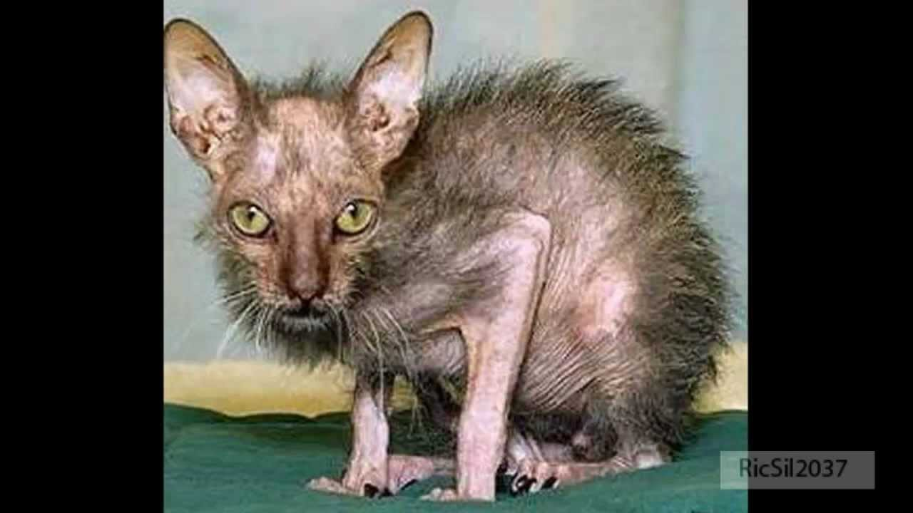 Ugly animal pictures found on the internet YouTube