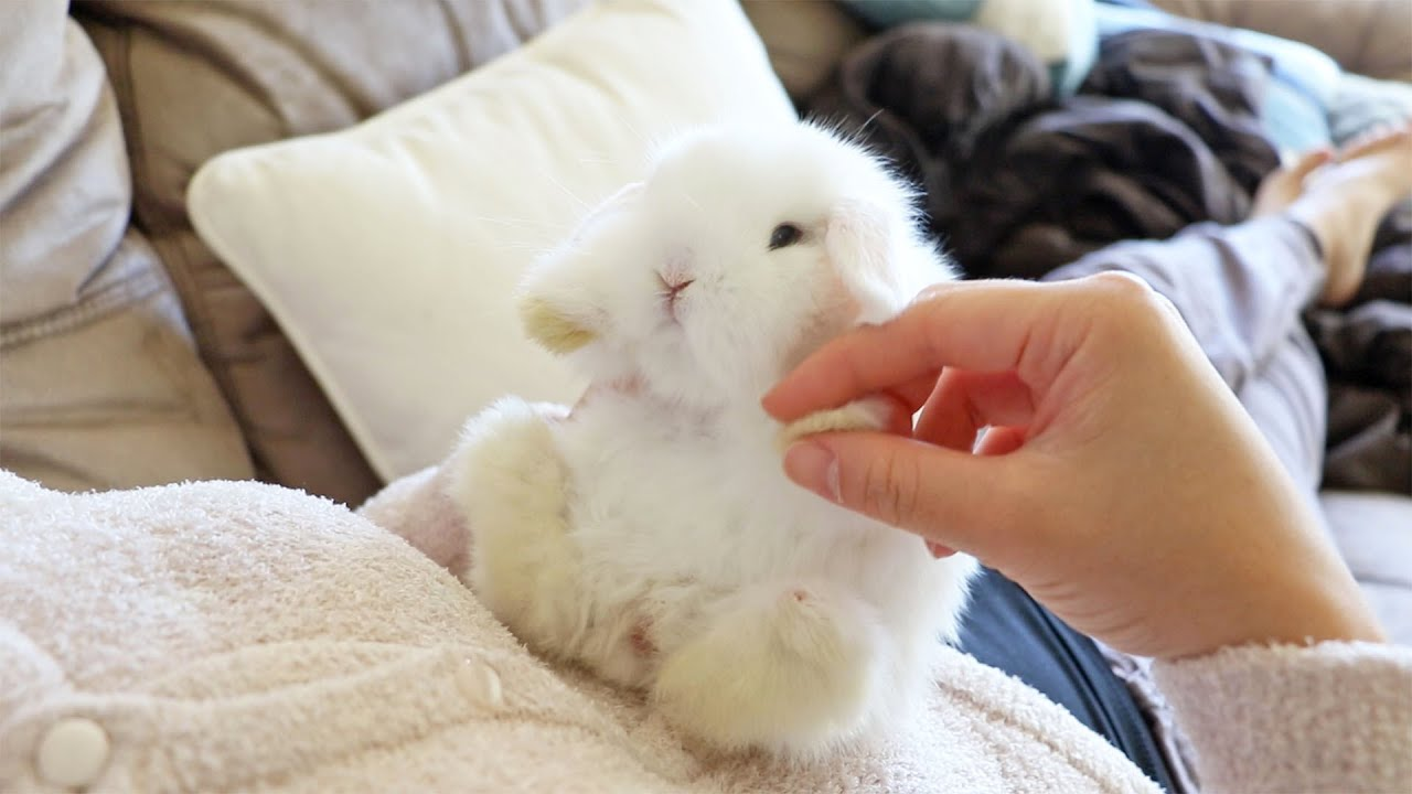 Cute white rabbit pictures