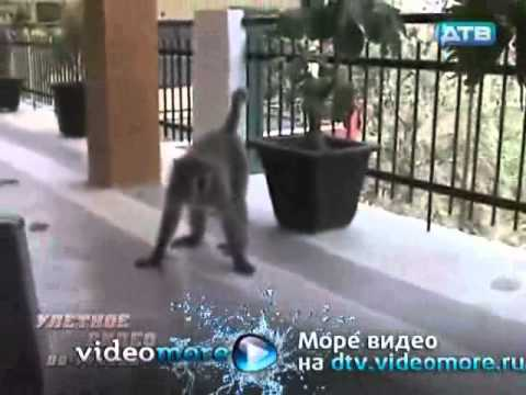 Улетное видео по-русски (2011) эфир от 14.07.2011
