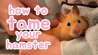 🐹 How to tame your hamster 🐹