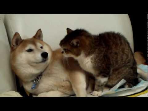 犬が猫に毛繕いしてあげてたら気に食わなくて猫パンチ!