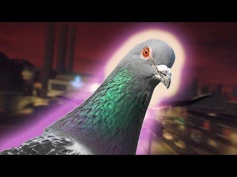 Фото голубей на аву
