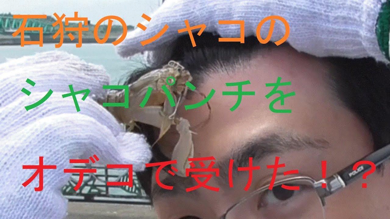 シャコの画像 p1_5
