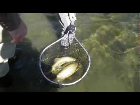 Big trout San Juan River Dry fly fishing nymph Clune family Oct 2011 Fuji HS10