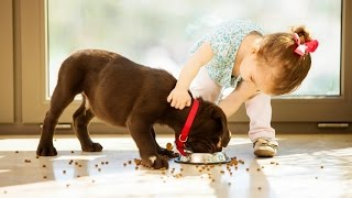 Dogs and Babies are Best Friends | 15 Minutes