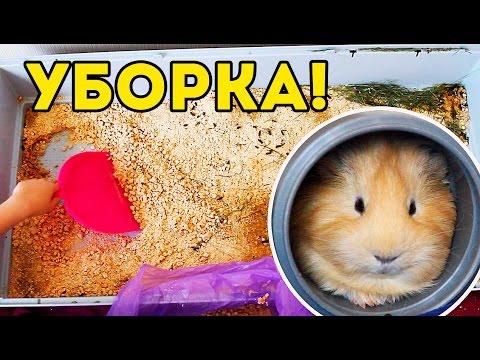 Уборка в клетке морских свинок / SvinkiShow