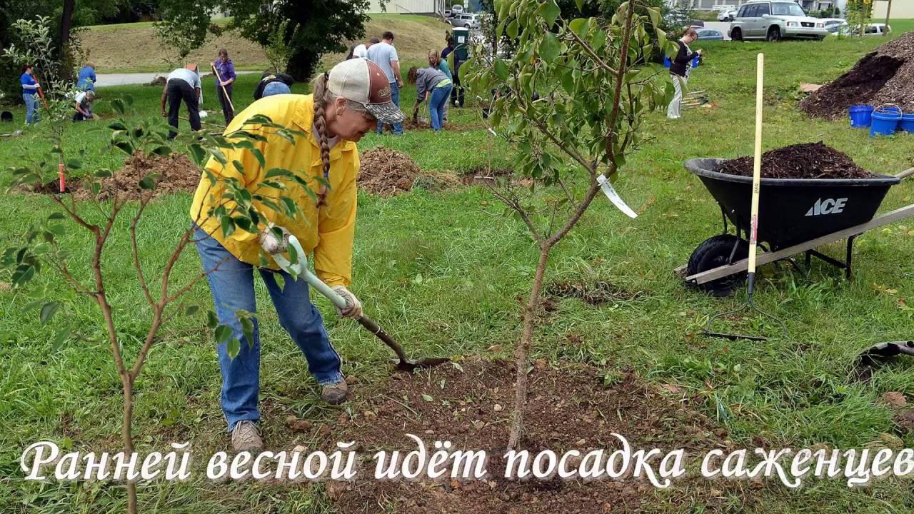 Бальзамин садовый посадка и уход Выращивание из семян в 48